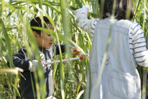 さとうきび収穫体験会を開催致しました!!